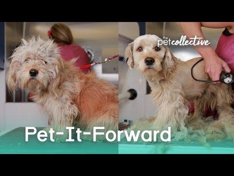 Pet-It-Forward | The Pet Collective