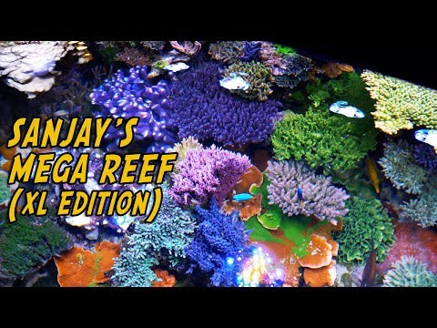 Sanjay 500 Gallon Mega Reef - Extended 'Reef Nerd' Edition +10 Minutes