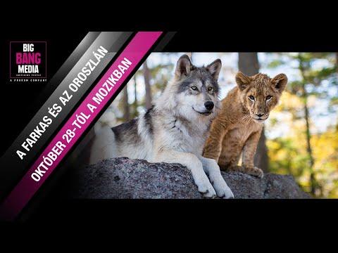 A farkas és az oroszlán (6) – Hivatalos magyar nyelvű előzetes