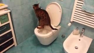 Gatti che usano il water 😀