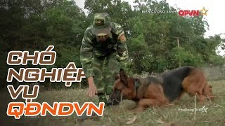 Lò đào tạo chó nghiệp vụ lớn nhất của Quân đội Việt Nam