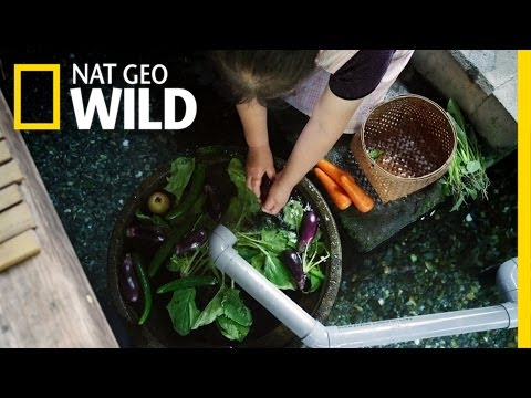 Unusual Kitchen Helpers | Wild Japan