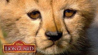 Who's Cuter? | It's UnBungalievable! | The Lion Guard | Disney Junior
