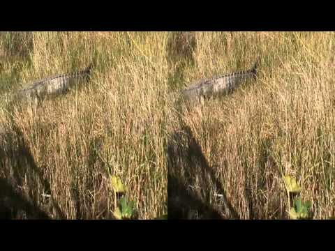 HD 3D High Speed Airboat ride through Florida Everglades