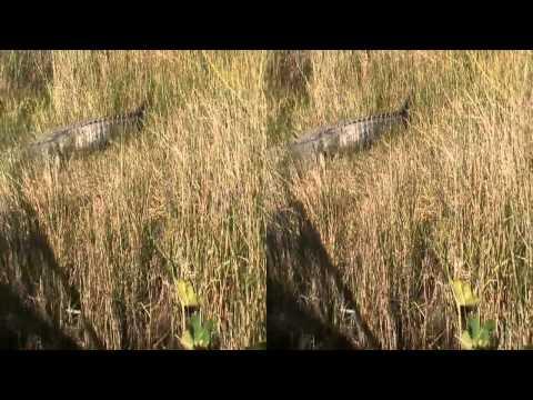 HD 3D High Speed Airboat ride through Florida Everglades