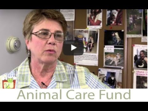 Purr View by Tonia Fleming 'Kingston Animal Shelter's  Animal Care Fund'