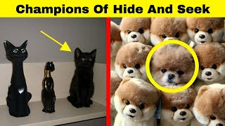 /hilarious animals who are the absolute champions of hide and seek