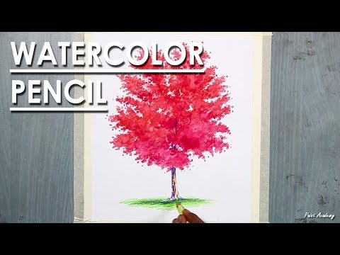 Maple Tree Drawing in Watercolor Pencil
