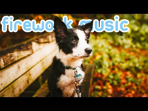 Firework Music for Dogs with Noise Anxiety! Reduce Bonfire night Stress!