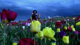 Thomas Schauffert World Music - Beauty of life