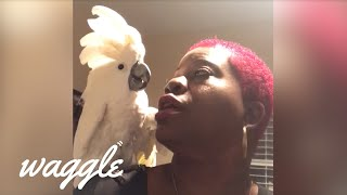 Birds Say the Darnedest Things I Funny Bird Compilation