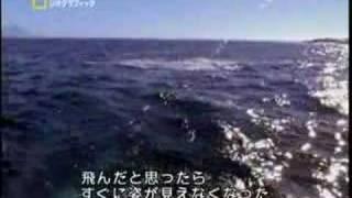 サメジャンプ3