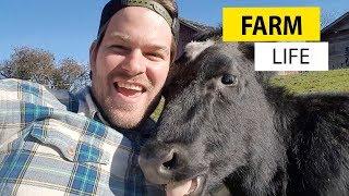 Farm Animals - YouTube