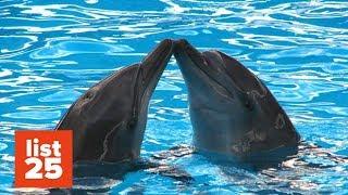 25 BIZARRE Animal Mating Rituals