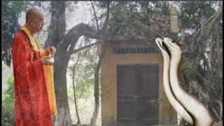 """Chuyện tâm linh có thật -Cặp rắn 'khổng lồ' tịnh tu ở chùa suốt 3 năm: """"Vừa định đuổi thì nó cúi đầu"""