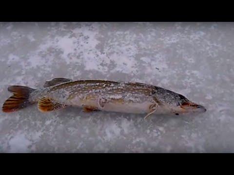 рыбалка в налобихе