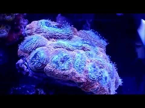 Day In the Life of a Coral -A Coral Time Lapse-