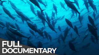 ►Track of the Tuna (FULL DOCUMENTARY)