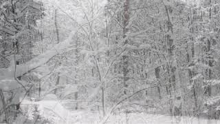 Winter Storm Sound Forest - Heavy Blizzard Snowstorm Ambience & Howling Wind Sounds For Relaxation