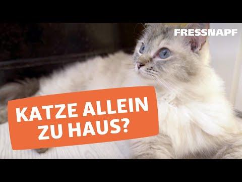 Betreuung von Katzen in der Urlaubszeit  -  Katzensitter oder Katzenpension/Katzenhotel?