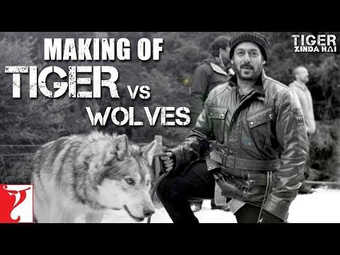 Tiger vs Wolves | Making of Tiger Zinda Hai | Salman Khan | Katrina Kaif | Ali Abbas Zafar