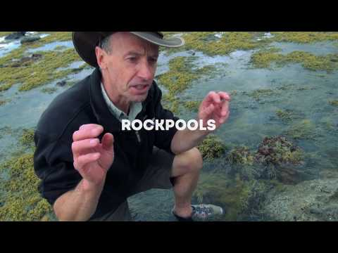 Wildlife Wanderings - Rock pools Ep 6 - Marine Flatworm & Sea Sponge
