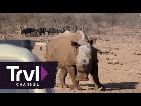 Josh Gates' Tips for Surviving Wildlife - Travel Channel