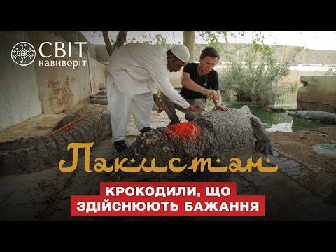 Опаснейшие религиозные ритуалы с крокодилами в храме суфиев