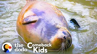 Tiny Lost Seal Grows Up To Be Blubbery And Hilarious | The Dodo Comeback Kids
