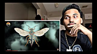 CICADA KILLER CAUGHT!... Return of the Sting?(REACTION)