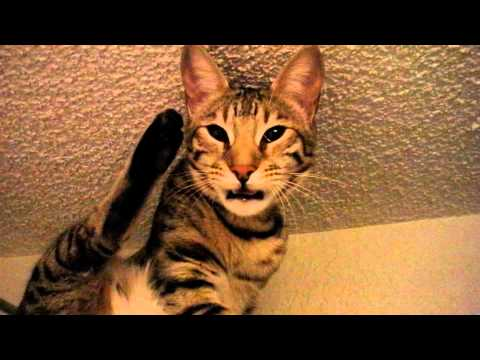 Cat Stinky Butt 16
