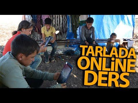 Tarlada Online Ders