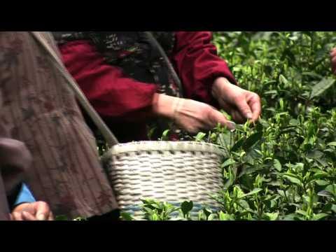JING Tea - Dragon Well Green Tea