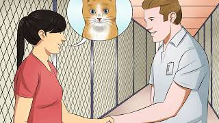 How to Have Cats Without Being a Cat Lady