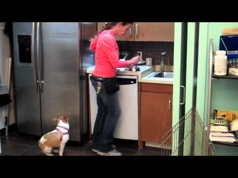 Effie Learning Impulse Control During Meal Preparation with JoAnne from Andrea Arden Dog Training
