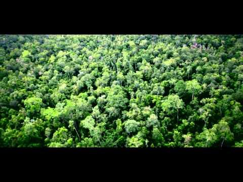 Un bosque de oportunidades en Paraguay