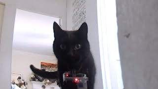 Go Pro Cat Collar Cam - What the cats really get up to when no one is home.