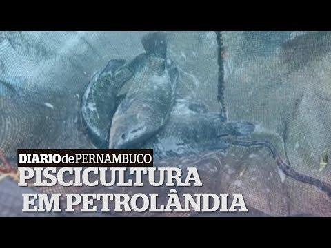 População faz criação de peixes no Sertão