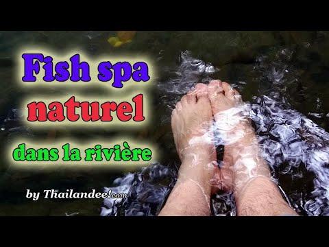 fish spa naturel dans la rivière