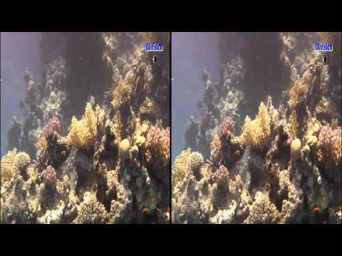 Tauchen im Roten Meer Part 2 3D