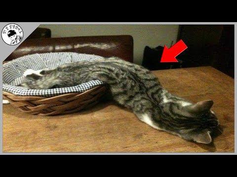 [담토상] 고양이의 몸이 액체 같은 이유를 알아보자.