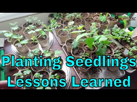 Lessons Learned With New Garden Seedlings