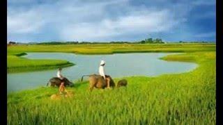 Những bức ảnh đẹp mê hồn của đồng quê miền Bắc Việt Nam