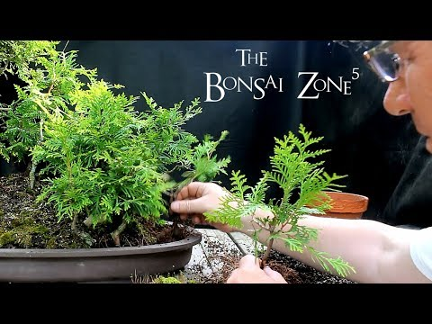 Avatar Grove Bonsai Forest, Part 1, The Bonsai Zone, May 2018