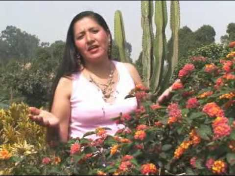 Huayno ayacuchano - Hoy te  recuerdo - Ricardina Pillihuamán