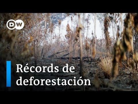 Bolsonaro rechaza que la Amazonía esté en peligro