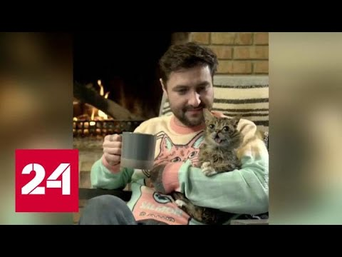 Умерла знаменитая кошка Lil Bub, прославившаяся из-за вынутого языка - Россия 24