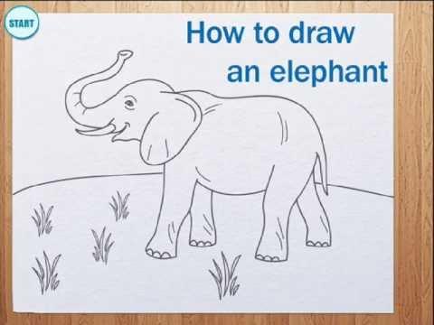 How to draw elephant - YouTube