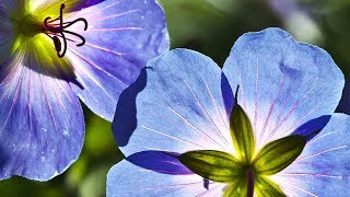 Morning Relaxing Music - Piano Music, Guitar Music for Positive Energy (Sarah) - YouTube