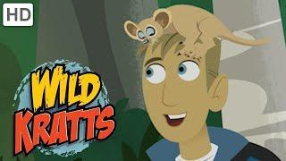Wild Kratts 🌳 Explore Madagascar!   Kids Videos